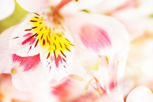 Pink light defocused flowers background