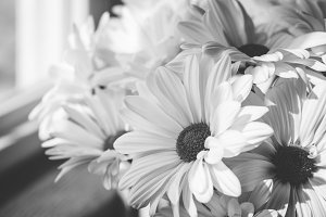Daisies by window in black and white