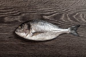 Fresh dorado fish on dark wooden background