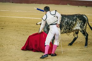 Bullfighter in white