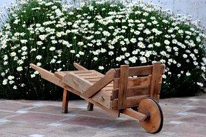 wheelbarrow and solid daisies,