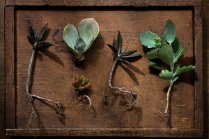Succulent plants on old box