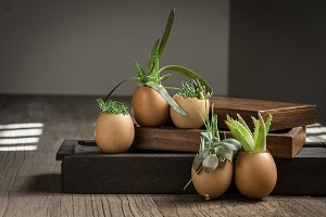 Succulents in eggshells and boxes