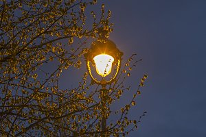 Lantern in the branches of a tree