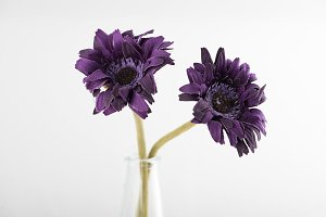 Two lilac flowers in a vase on white background.