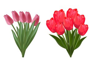 tulips, flowers, vector