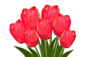 red tulips, vector