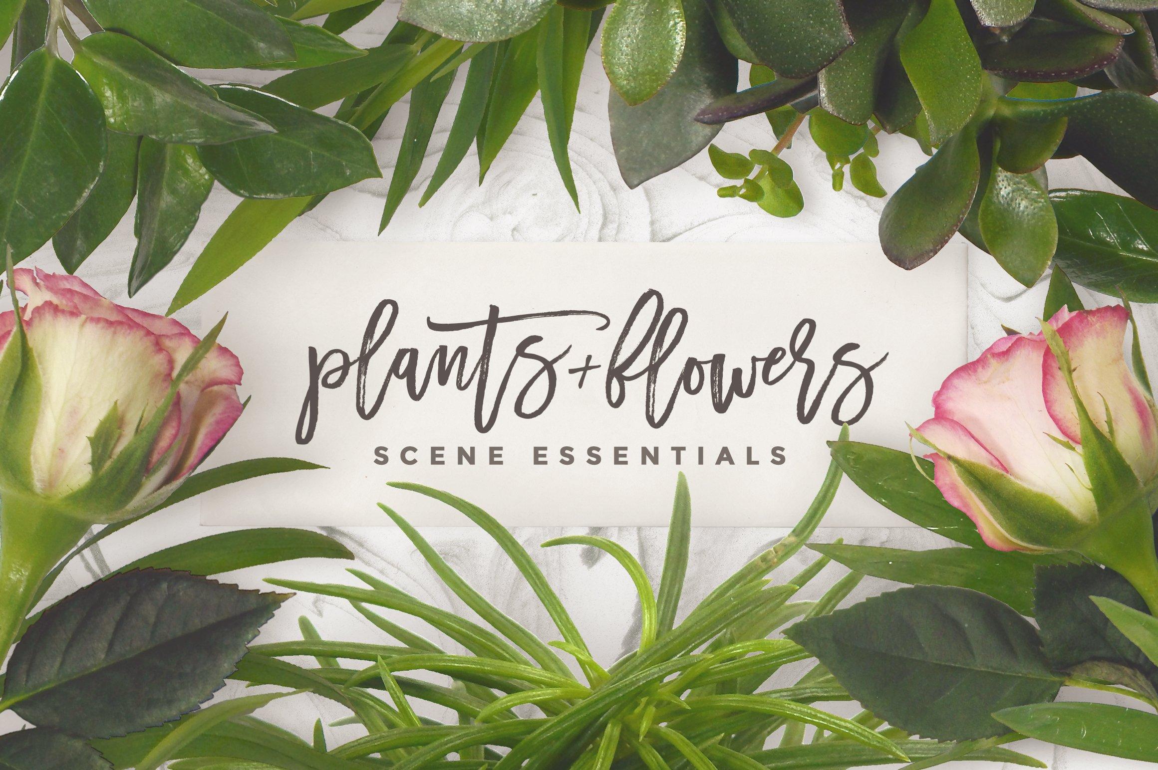 Scene Essentials Plants Flowers Product Mockups Creative Market