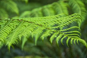 unfocused green ferns