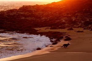 dog play at beach