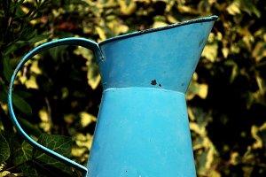 pitcher garden