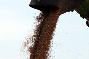 Grain in Combine