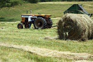 Hay harvesting 1