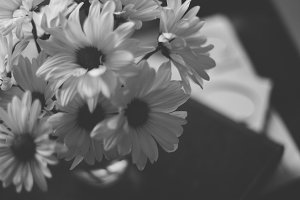 Daisies in black&white w/matte
