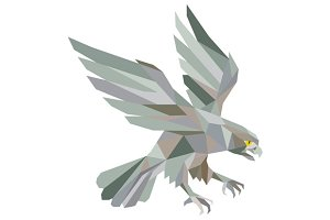 Peregrine Falcon Swooping Grey