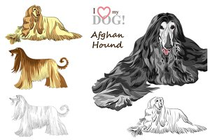 SET dogs Afghan Hound breed