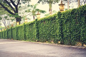 Green fence and hedge