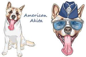 Dog American Akita Set