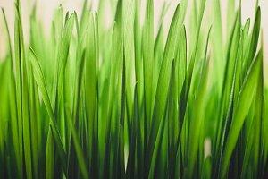 Fresh Grass Texture