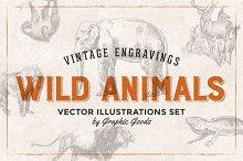 Wild Animals Engravings