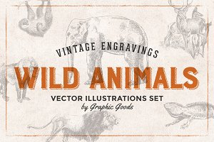 Wild Animals Engravings