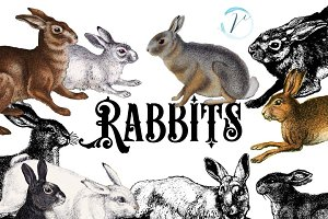 15 Vintage Rabbits Graphics