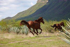 runnig horse