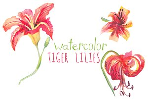 Watercolor Tiger Lilies