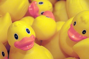Rubber ducks in wait