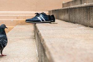 Black pigeon meets black sneakers