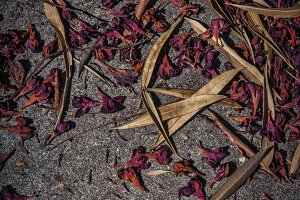 Dried Leaves on Cement (Photo)