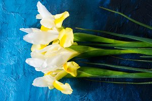 White and yellow iris on blue