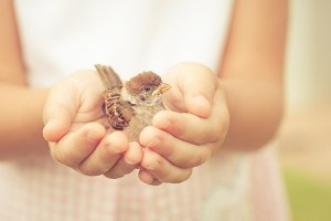 sparrow sitting in children`s hand