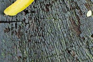 Yellow Leaf on Wood