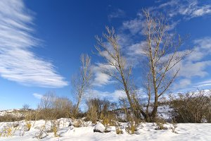 trees in the snowy mountain