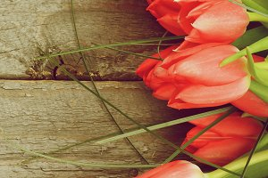 Frame of Spring Tulips