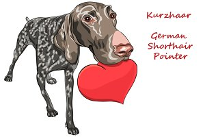 German Shorthair Pointer or Kurzhaar
