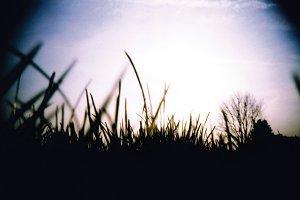 Grass at ground level