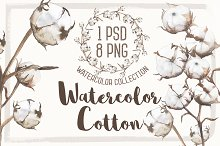 cotton watercolor
