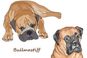 Dog Bullmastiff