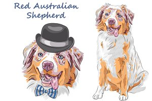 Dog Red Australian Shepherd