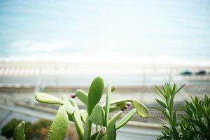 cactus outdoor near the sea