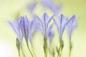 The light of the springtime