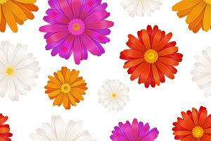 Colourful gerbera flowers on white