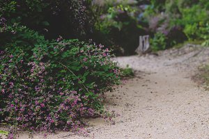 flower lined path