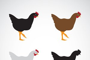 Vector image of an chicken design