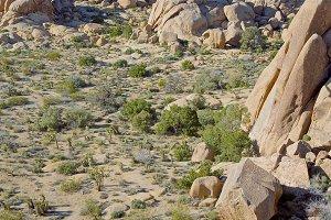 Lush Boulders