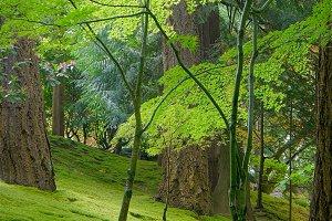Vibrant Japanese Garden Forest Floor