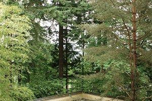 Zen Garden Canopy