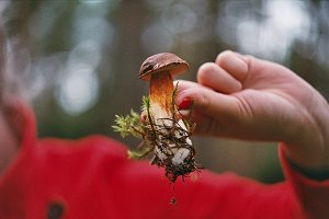 Girl holding a mushroom in a forest